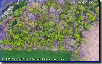 Overhead close up of trees and farmland in the spring